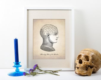 Phrenology Head Human Anatomy Art Print, Human Anatomy Print, Phrenology Print, Phrenology Head Art Print, Psychology Head Diagram Art Print