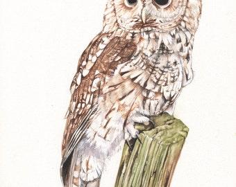 Tawny owl Print of watercolour painting 5 by 7 print - TO4815, bird art, wall art, home decor, wildlife art wall art print - bird art print