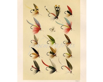 TROUT FLIES  glorious fly fishing print no. 2