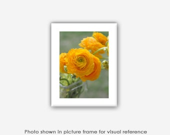 Flower Photography, Ranunculus, Prints, Photos, Blank Photo Greeting Cards, Note Cards,Wall Art, Ethereal Nature Photography, Yellow Flowers