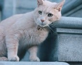 Cats of Amsterdam - Mimi - Photography
