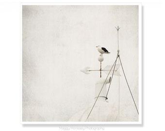 Nautical Photograph, Beach Home Decor, Zen Art, Beach House Wall Art, Seagull Art Print