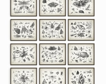Insect Wall Art Poster Set Of 12 - Entomology Art Prints - Zoology Art Posters - Antique Book Plate Insect Art Prints - Home Decor (AB248)
