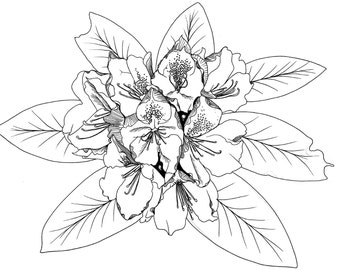 Hand Drawn, Illustration, Print