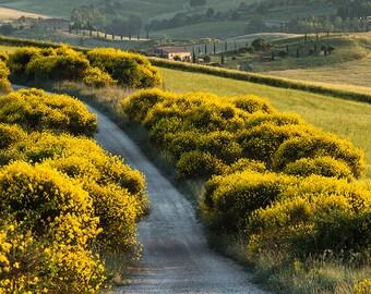 Tuscany landscape, Tuscany photography, italian landscape, gorse, street, yellow, Tuscany Art. Siena, Fine Art Photography.
