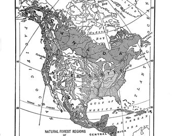 1911 Map of Forest Regions of North America | Vintage poster reproduction | Download and print!