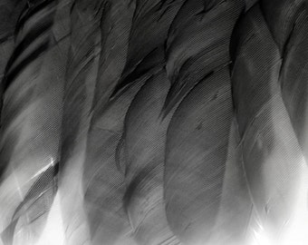 Crow Feathers, Feathers, Black Wings, Fine Art Photography, Black and White Photography, Black and White Feathers, Crow Art