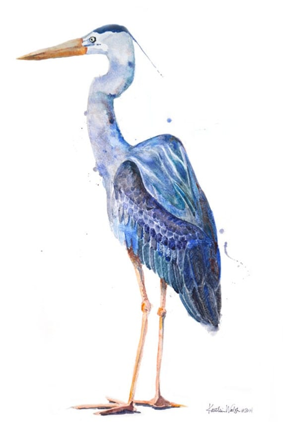 Pics for great blue heron clip art for Great blue heron coloring page