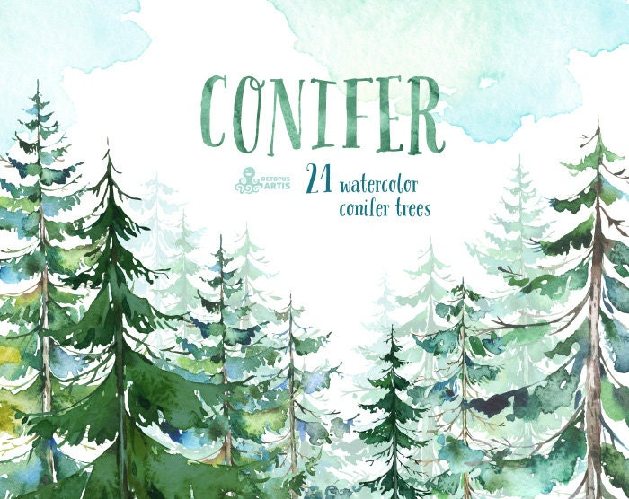 Conifer Trees. Watercolor pine spruce forest wood