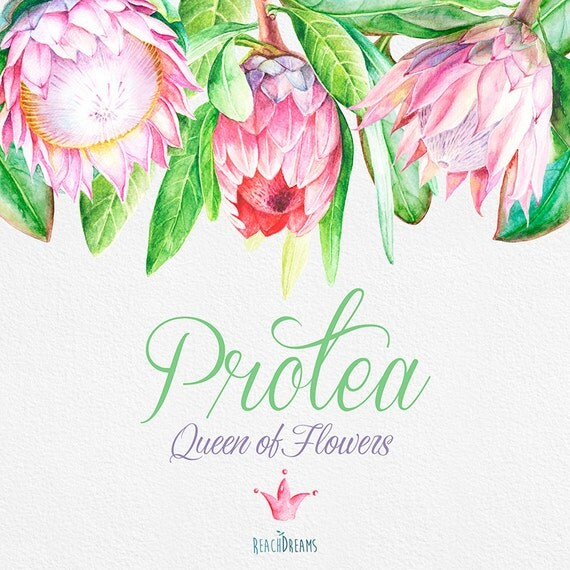 Protea Queen of Flowers, Wedding Watercolor Flowers and ...