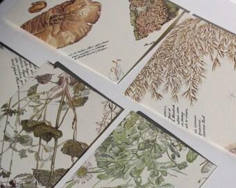 "Handmade botanical illustration envelopes, set of 10 medium sized approx 4.2 x 6.2"",  for 4x6 photos, vintage botaniacal illustration book"