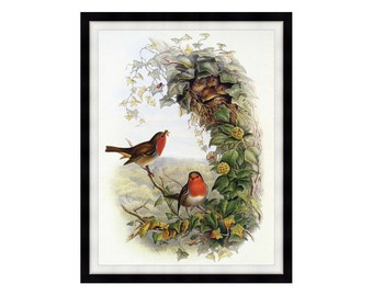Framed Modern Canvas Art Robin John Gould Birds Print Realism Painting Reproduction - Sizes Small to Large - M00871