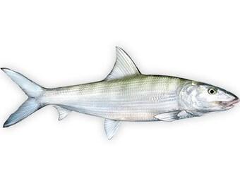 Bonefish Decal - Bonefish Sticker