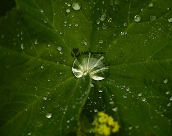 Droplet, Macro Photography, Nature Photography