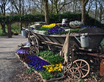 The Dutch take their planting seriously
