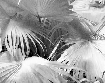 Black and White Photographic Print of Tropical Plant Leaves