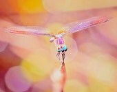 Dragonfly Photography, Magical Nature Photo, Fairytale Decor, Dragonfly Print, Colorful Dragonfly Wall Art, Pink Decor, Girls Room Decor