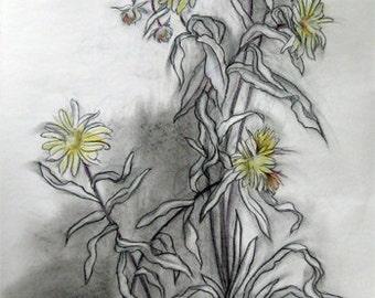 Beach Flowers II, original drawing, large, charcoal, pastel, black, yellow
