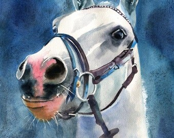 Welsh Cob Pony Horse White Grey Gray Blue Art Reproduction of my Watercolor Painting Equine Equestrian Decoration Decor Andalusian Arabian