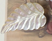 A Vintage Carved Mother of Pearl Button Huge Leaf Just Gorgeous MOP