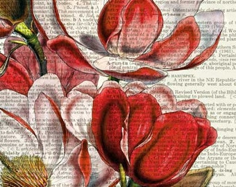 magnolia II dictionary page print