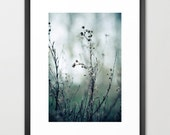 nature photography- flowers- pale blue- silver- The Dance fine art photograph- soft blues- autumn photography- modern wall art