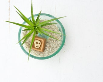 Recycled bottle bottom terrarium - air plant holder - Pale Aqua with Tillandsia Montana and Skull tile