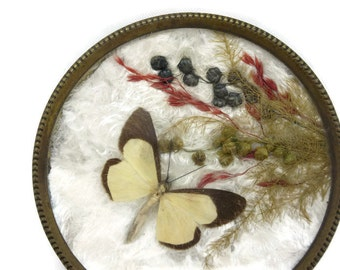 Real Moth Ring Dish - Under Glass, Dried Flowers, Brass, Mid Century, Miniature Trinket Bowl