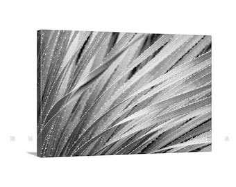 Botanical Art, Agave Picture, Sotol, Desert Agave Art, Photo on Canvas, Black and White, Arizona Art, Ready to Hang, Abstract Art