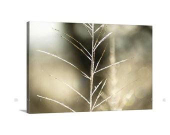 Minimalist Art, Nature Photography, Abstract Art, Golden Art, Giclee Canvas Print, Fine Art Photography, Wall Art Canvas, MurrayBolesta