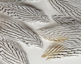 VOGUE  FEATHERS LOOSE,  Silver Pheasant Feathers / 853