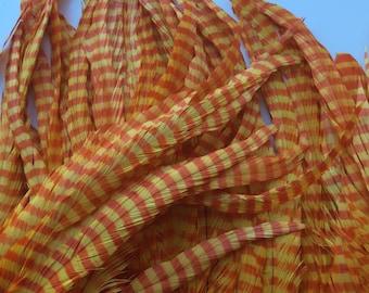 ZEBRA Stripy Coque Tail Feathers / Orange and Yellow  /  Z - 11