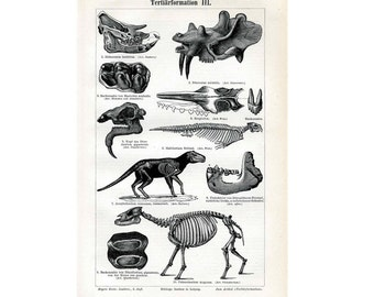 1894 PREHISTORIC SKELETONS PRINT original antique medical anatomy lithograph - fossils