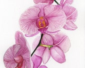 Orchid -- Original Watercolor Painting