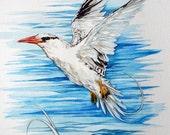 Tropicbirds Painting Original Watercolor