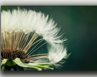 Beautiful Single Dandelion - Fine Art Photography on Archival Paper - Home Decor - Modern Wall Art - Nature Photography, Flower Photography