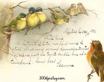 birds - vintage postcard digital scan printable images gift tag hang tag instant digital download script handwriting image fabric transfer