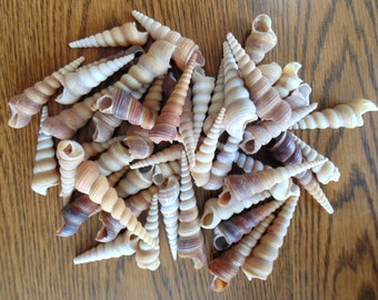 "45 Spiral Shells For Crafts Undrilled 2-4"""