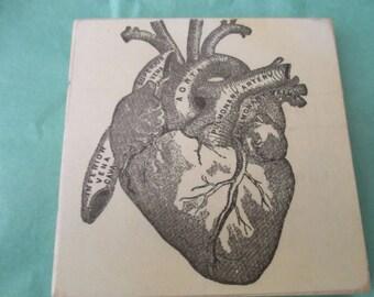 Heart Organ Coaster