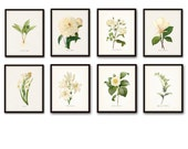 White Botanical Print Set No. 8 - Botanical Print - Giclee Canvas Art Print - Antique Botanical Prints - Posters - White Flowers - Wall Art