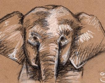 """5"""" x 7"""" Bornean Pygmy Elephant"""