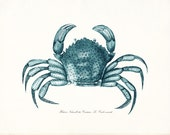 Coastal Decor Antique French Blue Crab Giclee Art Print