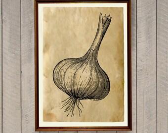 Vegetable poster Garlic print Kitchen decor AK702