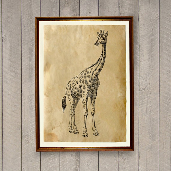 Giraffe Poster Rustic Home Decor Animal Art Print Ak553