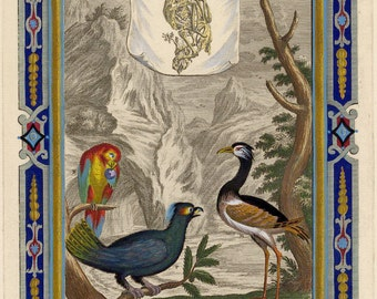 18th Century Print of a Parrot, Capercaillie and Plover, Scheuchzer Physica Sacra Date 1728 Decorative Hand Coloured Copperplate Engraving