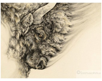 Bison - 16 x 22 art poster print - Buffalo