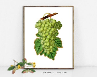 GREEN LEAFY GRAPES - large digital image download - printable antique fruit illustration for image transfer - totes, pillows, wall decor