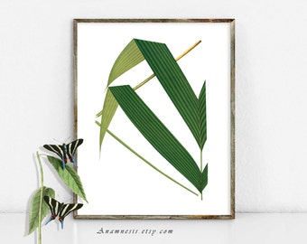 PALM TREE FRONDS 3 - digital image download - printable antique plant illustration retooled by Anamnesis - image transfer - totes, pillows