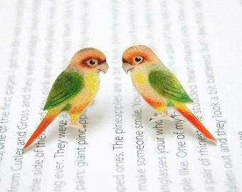 Hand drawn Parakeet earrings. Bird Earrings. Parrot ear studs