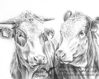 Pencil drawing cow portrait A4 21x29,7cm animal cattle cows original varnished